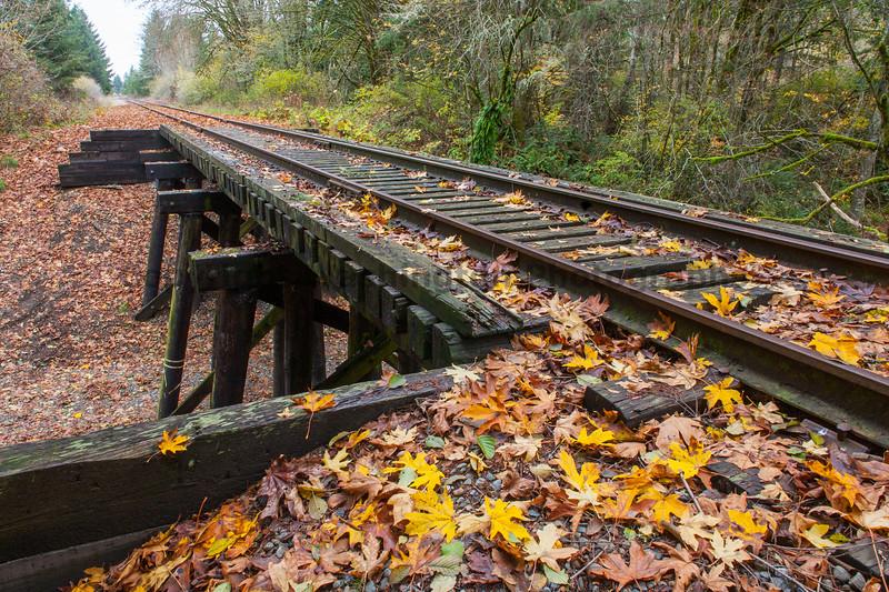 Railroad Tracks in Autumn 15