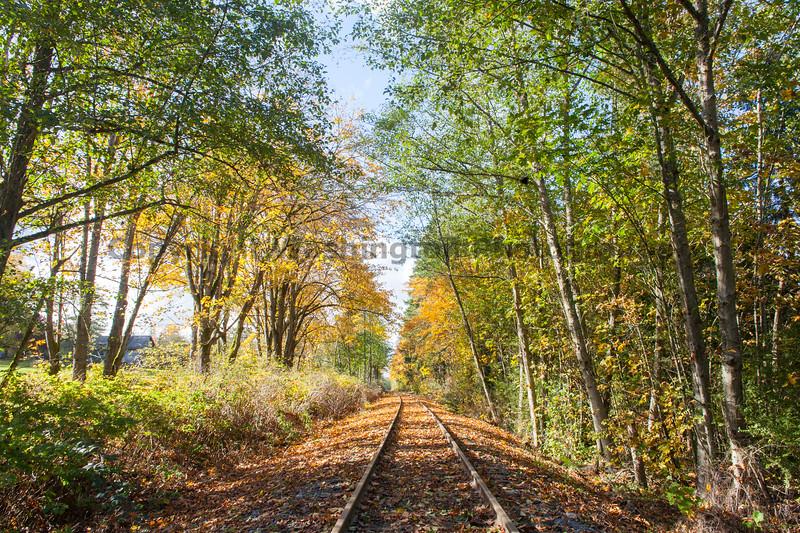 Railroad Tracks in Autumn 11