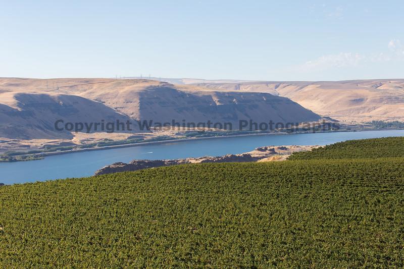 Vineyard - Columbia River Gorge 128