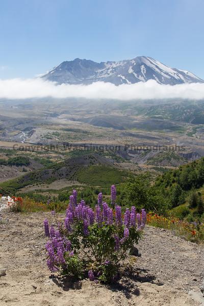 Mt St Helens Johnston Ridge 165