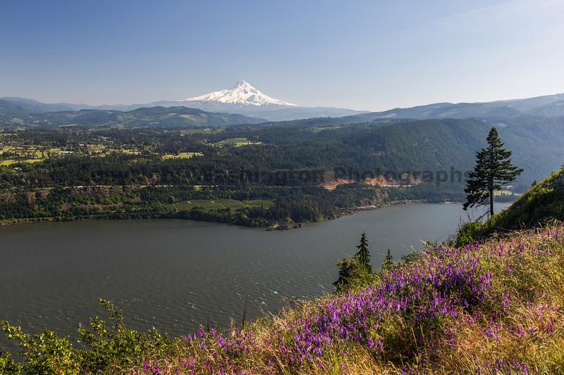 Columbia River Gorge White Salmon 14
