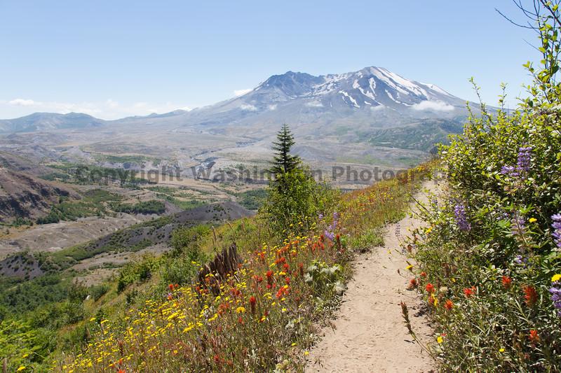 Mt St Helens Johnston Ridge 182