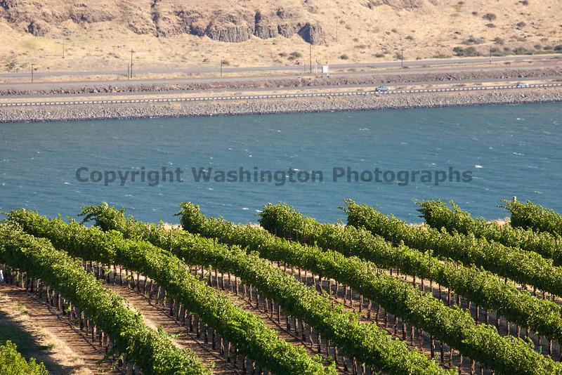 Vineyard - Columbia River Gorge 108