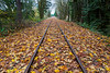 Railroad Tracks in Autumn 14