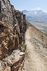 Mt St Helens Johnston Ridge Trail 159