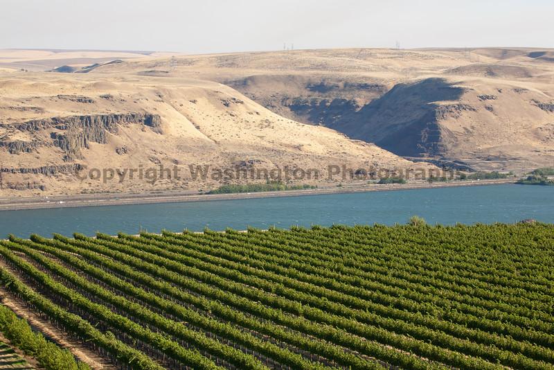 Vineyard - Columbia River Gorge 100