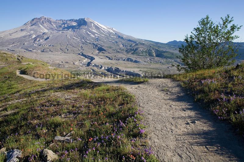 Mt St Helens Johnston Ridge 120