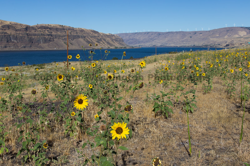 Columbia River Viewpoint 59