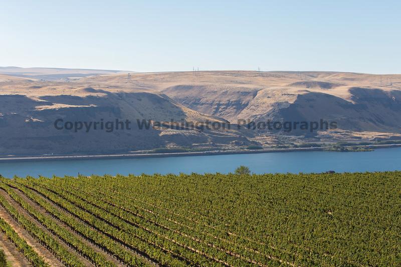 Vineyard - Columbia River Gorge 127