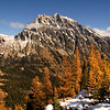 Mount Stuart and Larches