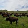 Custer State Paek