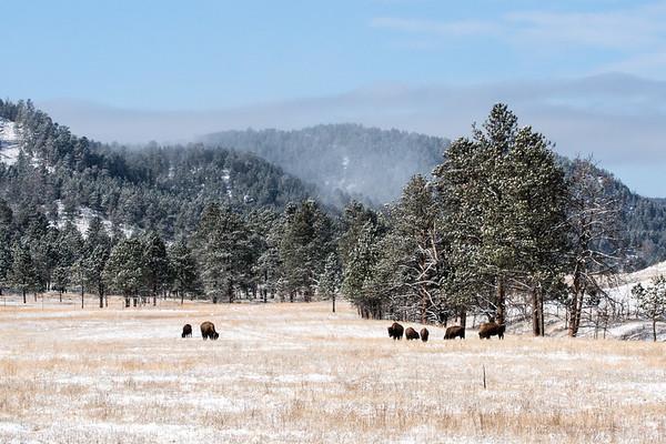 Winter Scenes in Black Hills