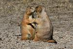 Badlands National Park :
