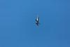 An f-16 at the Air National Guard Airshow in Sioux Falls, South Dakota, USA.