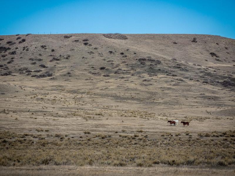 Horses - South Dakota
