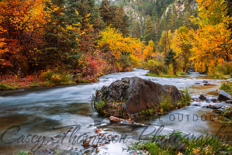 Fall Colors on Spearfish Creek