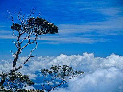 Mount-Kinabalu-Borneo-Asia