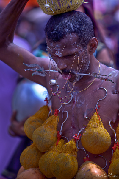 Devotee pierced with hooks and spikes at Thaipusam