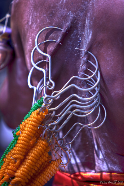 hooks in back of devotee at Thaipusam Festival