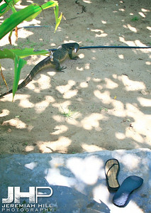 """Morning Visitor"",  Perhentian Islands, Malaysia, 2007 Print ML-101"