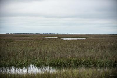 Pristine Marshland