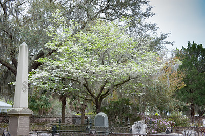 Beautiful Dogwood Tree