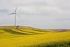 Wind Farm Spring 43