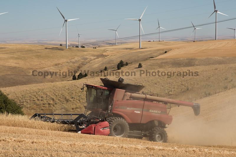 Wheat Harvest 157