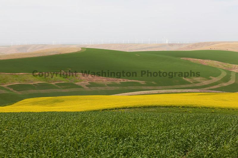Wind Farm Spring 41