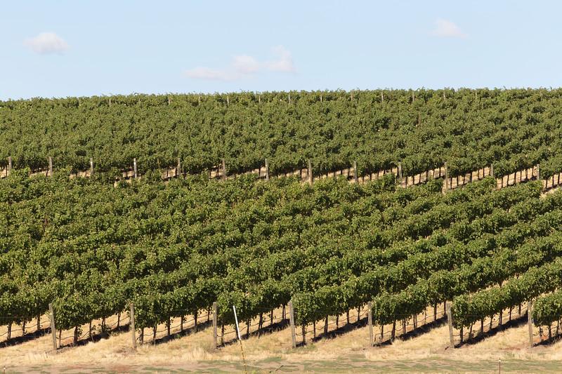 Vineyard - Walla Walla 20