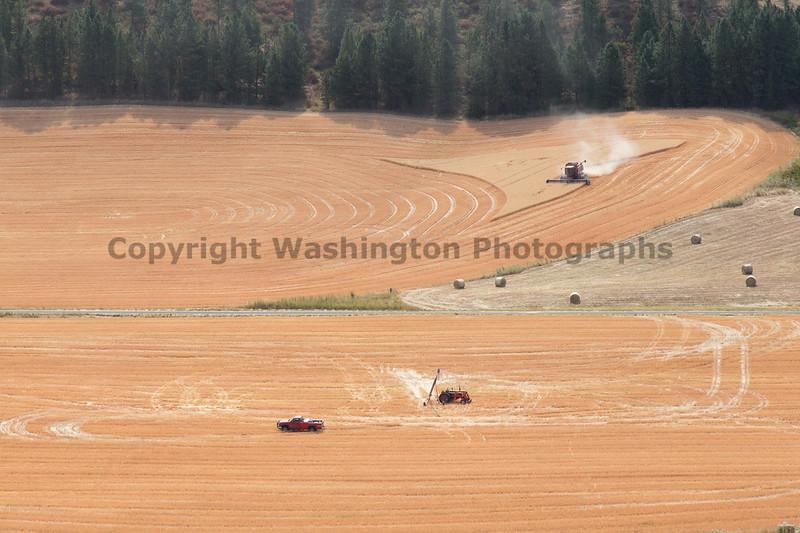 Wheat Fields in Summer 117