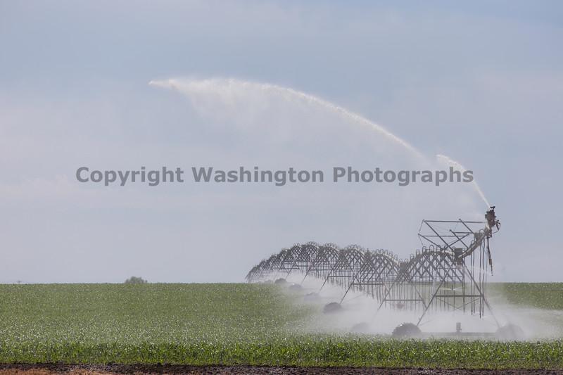 Cornfield Sprinkler 18