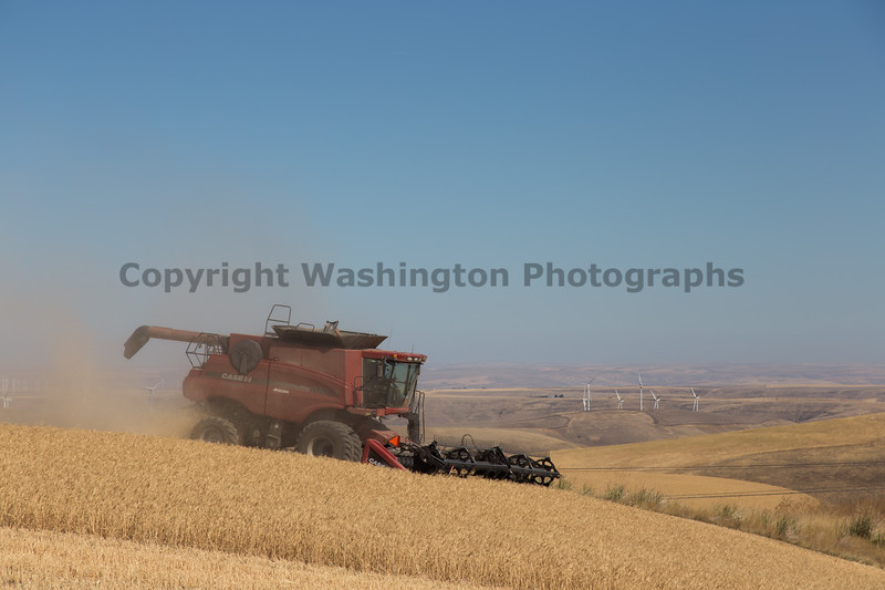 Wheat Harvest 150