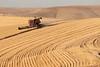 Wheat Harvest 183