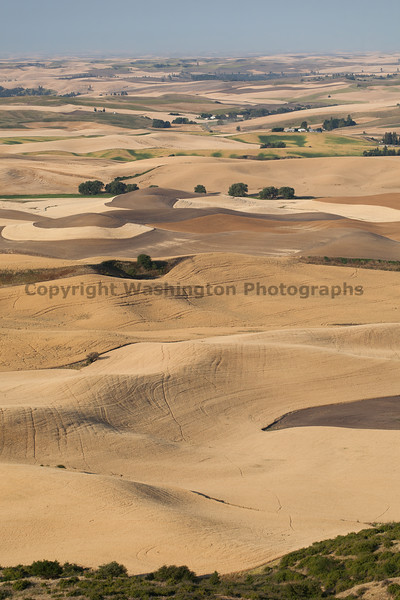 Steptoe Butte Summer 40