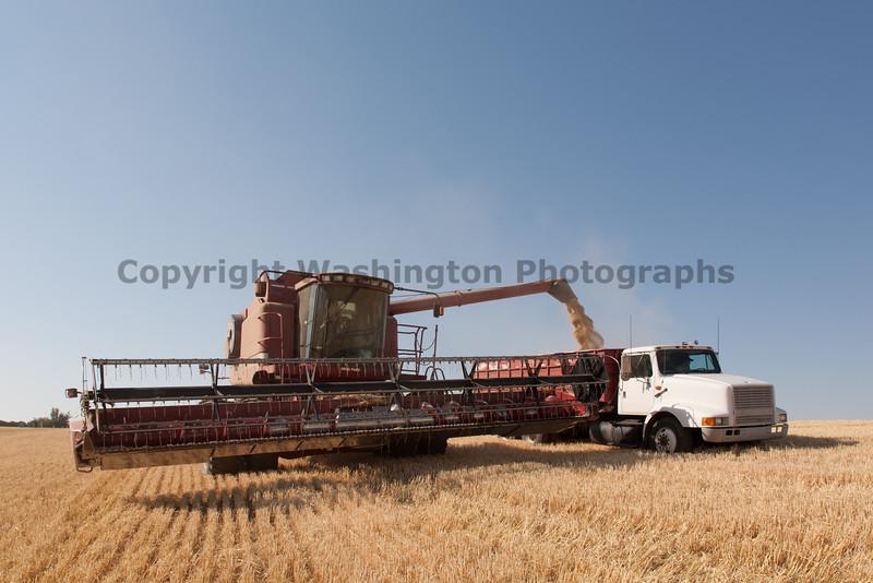 Wheat Harvest 64