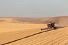 Wheat Harvest 182