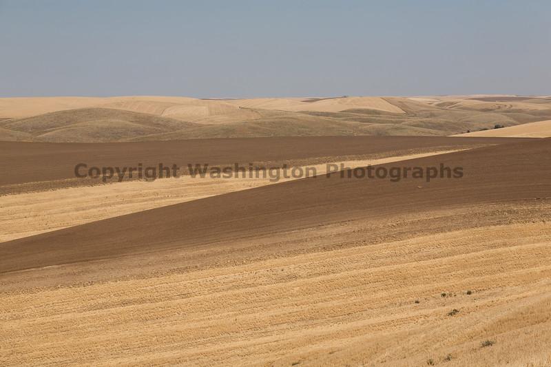 Wheat Fields in Summer 83
