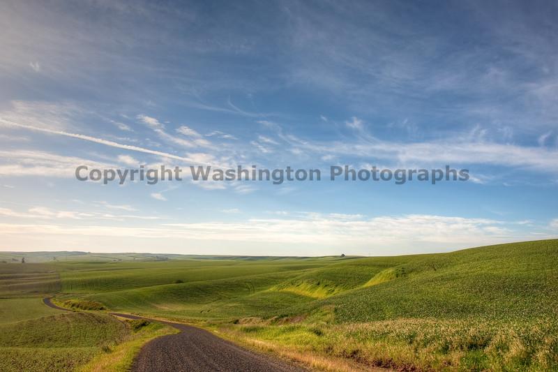 Wheat Fields in Spring 139