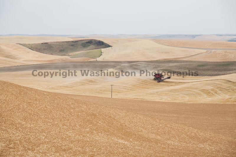 Wheat Harvest 61