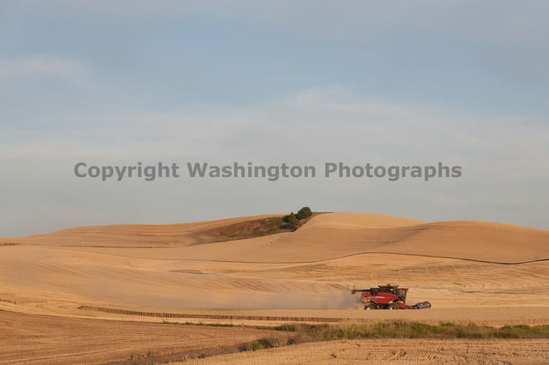 Wheat Harvest 137