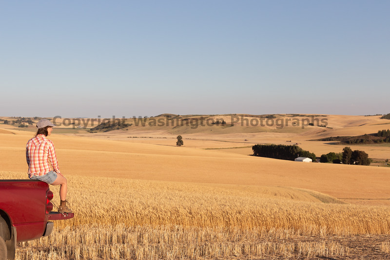 Wheat Farm Girl 268