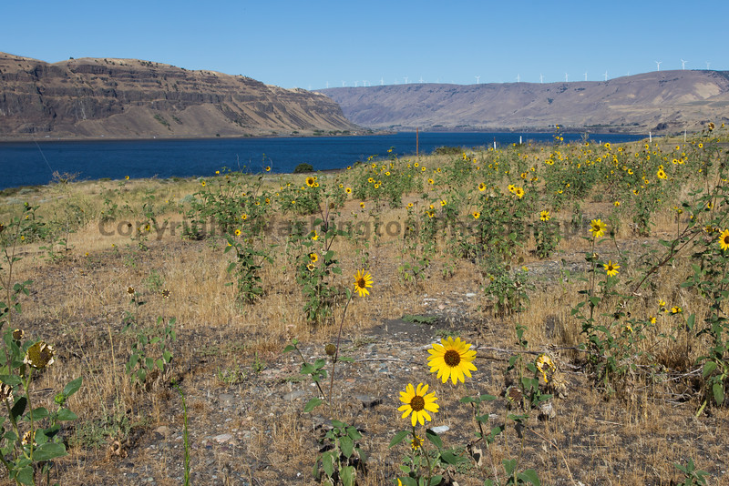Columbia River Gorge Viewpoint 60