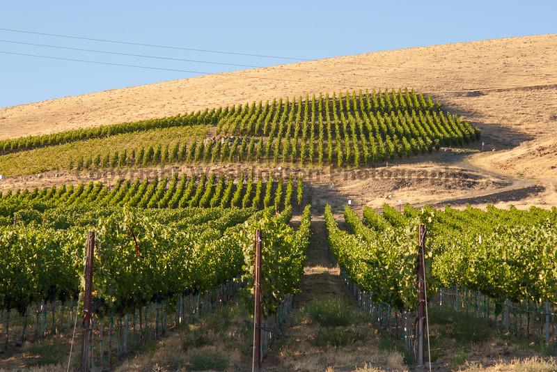 Vineyard - Red Mountain 103