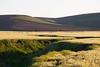 Wheat Fields in Spring 110