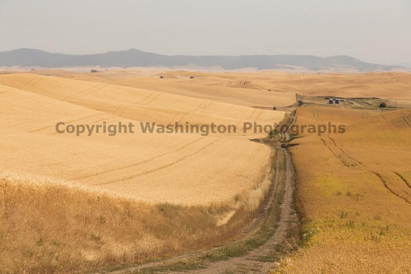 Wheat Fields in Summer 130