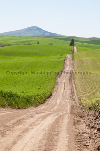 Wheat Fields in Spring 036