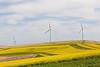 Wind Farm Spring 40