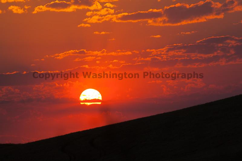 Wheat Field Sunset 18