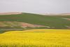 Wind Farm Spring 46